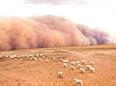 甘肃沙漠治理方法