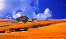 沙漠里种水稻——万博manbetx官方网页科技集团