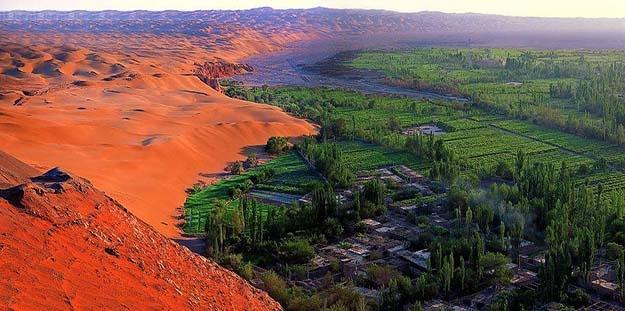 万博manbetx官方网页治理沙漠的独家秘诀